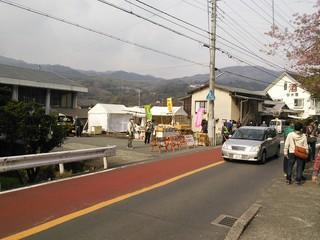 河津桜原木付近.JPG