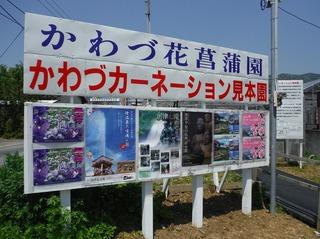 花菖蒲園10.jpg